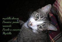 Animali / I miei a...mici e non solo
