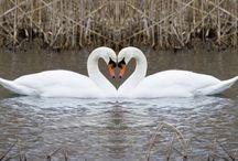 En Sadık Aşıklar