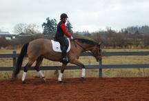Riding & Training