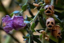 İnteresting Flowers & Plant (İlginç bitkiler & Çiçekler)