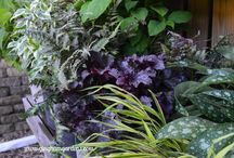 Plant Shopping / Places to go plant shopping - nurseries, farmer's markets, plant sales. Tips for plant shopping.
