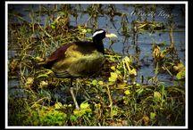 Birds / Love to captured Bird Photo