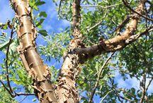 Bark / lichen / textures / colours / shades / Rich bark complexions