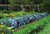 Gardening   New Braunfels Homes / #recipes #realestate #hillcountry #newbraunfels #texas #homesforsale #stagingtips #diy #xeriscape #kitchens #livingroom #kitchen #bedroom #bathroom