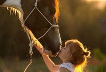 sesión con caballos