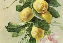 Цвет, фрукты