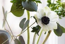 Fleurs  / by Jenna Brooke
