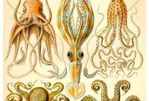Natura Artis Magistra / de natuur is de leermeester van de kunst