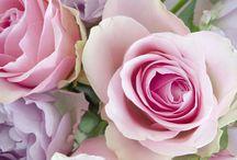 une rose pas rose