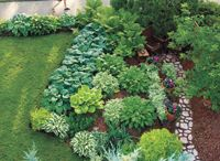 Gardening in the Shade / ideas for gardening in the shade / by Susan DeLucca