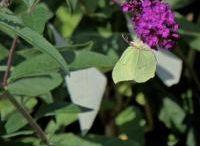 eigen foto,s  vlinders