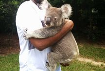 Queensland, Australia Travel Photos