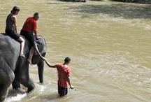 Volunteer Thailand / by Lo Hood
