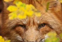 fotos animais