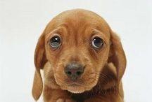 Olhar De Cachorrinho