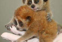 Cute Animals / by Susan Robinson