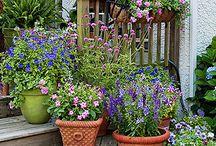 Garden in pots