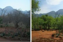Summer versus Winter in Hoedspruit / The vast difference between properties in Summer and Winter in the Lowveld.