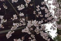 2016 Zushi, Shonan Area