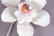 Sugar flowers / by Mariya Yordanova