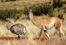 Flora y Fauna Chile