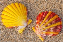 Sea surprises