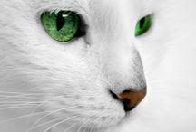 ~CATS~ / by Caroline-Jeannine