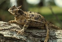 Lizards, Snakes, Toads, Frogs, Plus