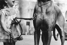 Drago, Rockwell and other Big Dogs / by Beth Kilsdonk