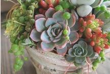 suvculent bouquet