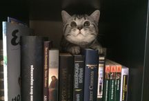 Котик наш