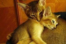 CatCentric's Nightly Wishes! / Every night, we wish our friends a very special good night.