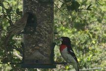 Birds of Mo / Actual photos of birds from Mo-Ranch!