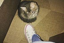 Peluso / Gatos