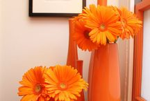 Orange - it's a Girlfriend(ology) Thing / Orange - it's gerbera daisies & tulips, it's pumpkins & carrots, it's bright & cheerful. It's also our logo color (& our 'friendship flower' color) -& makes girlfriends happy! So www.girlfriendology.com :) / by Girlfriendology.com - Inspiring Friendship
