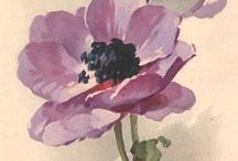 1kwiaty