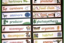 Word walls for EAL learners / Great possibilities for ECE centres and primary classrooms