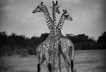 Animal-osity / by Taronna McKee
