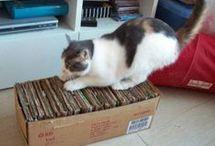 vychytávky pro kočky
