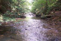creeks & streams / by Frances Hood