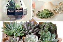 + succulent love ;