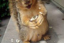 Squirrels / by Ruth Cheney