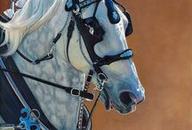 Horses in Art- Draft Horses