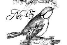 desenhos/aves