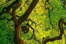 Tree and colour