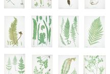 Botanical prints and patterns