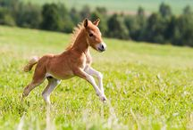 paarden/pony's