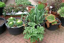 Plant Lovers' Container Gardens / Ideas and instructions on creating beautifully potted containers.