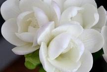 Blomster<3