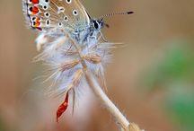 Nature's powerful charm